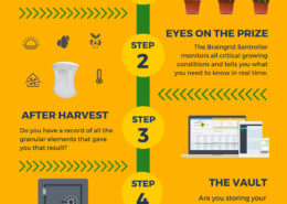Infographic: Propagation, cannabis harvest, vault, delivery