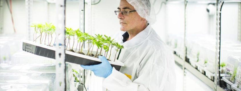 Shlomo Booklin - Master Horticulturalist in pharmaceutical uniform in a grow room